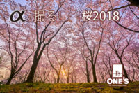 α<アrファ>デジタル一眼カメラ,桜,作例,レビュー