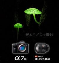α7III,SEL85F14GM,ILCE-7M3,光るキノコ,神戸市,作例,レビュー,撮り方,シイノトモシビタケ