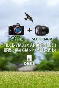 α7III,ilce-7m3,sel85f14gm,α<アルファ>デジタル一眼カメラ,GMレンズ,作例,AF性能,燕,ツバメ