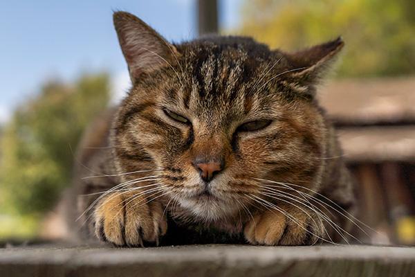 α7iii,a7iii,ilce-7m3,動物のリアルタイム瞳AF,SEL24F14GM,作例,ねこ,猫