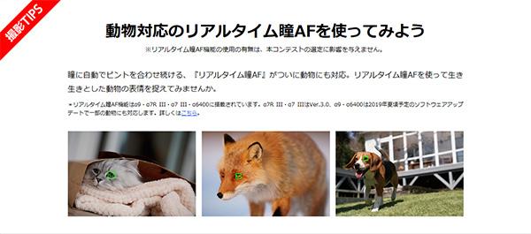 Instagaram,フォトコンテスト,アニマルポートレート,動物の瞳AF