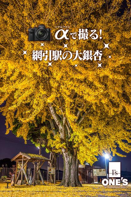 α<アルファ>で撮る!,網引駅,大銀杏