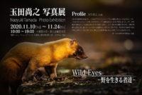 玉田尚之,写真展,Naoyuki Tamada,Wild Eyes,野を生きる者達,ソニー,α<アルファ>